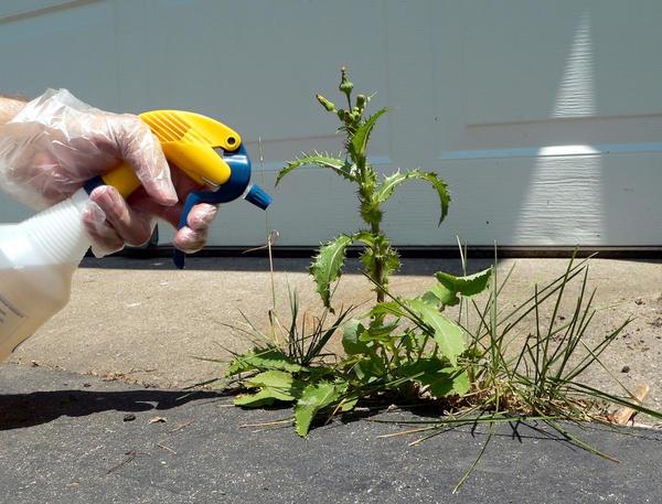 Средство от сорняков может быть опасным для здоровья человека